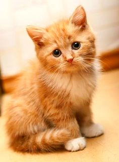 Top 5 Amazing Adorables Cats You Ever See
