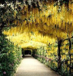 Gardens of Henry VIII's Hampton Court Palace