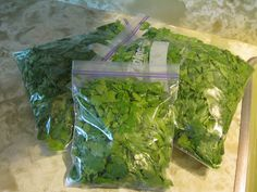 Harvesting and Preserving Cilantro or Basel.  Coat leaves w small amount of olive oil, freeze. Use immediately when taking out of freezer otherwise will go limp and slimy.