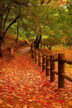 It's a beautiful world Autumn Trees, Autumn Leaves, Autumn Scenery, Beautiful World, Beautiful Places, Fall Pictures, Fall Pics, Forest Pictures, Fall Photos