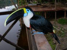 Ave exótica.Turismo Amazonas Colombia visitanos http://siemprecolombia.info/amazonas-colombiano/
