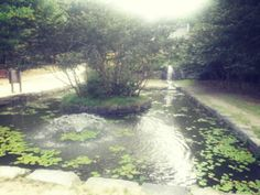 [담양] 이승기 연못 :: 겨울에 또 와서 건너볼까?(위험ㅋ)
