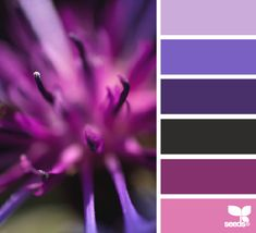 Trouble picking colors for your home? Sensbily Chic Designs for Life can help. 704-608-9424 sensiblychic.biz