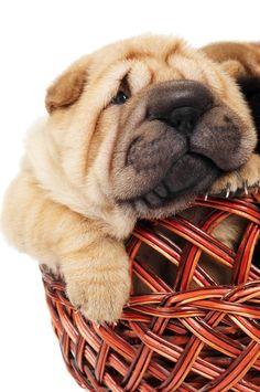 www.PamperedPetsTravel.com  #travel #trip #traveling #PetTravel #dog #dogs #puppy #puppies #pet #pets #cute #CuteDog