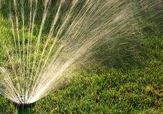 Wässern: so kommen Pflanzen durch den Sommer - [LIVING AT HOME]