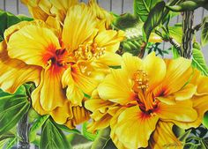 Hibiscus Flowers - Coloured Pencil Drawing by beautyinmetal AKA 'M' from S Photography, via Flickr