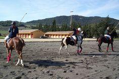 Wer gerne auf dem Pferderücken grandiose Landschaften erforscht ist hier genau richtig! Der ehemalige Poloclub in Jimena de la Frontera ist komplett ausgestattet und bietet auf insgesamt 109.000 m2 alles was das Pferde- und Menschenherz begehrt. Malaga, Horses, Animals, Cottage, Hay Bales, Andalusia, Exploring, Indoor Courtyard, Landscapes
