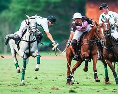 Polo Horse, Kings Game, Sport Of Kings, Polo Club, Horse Riding, Equestrian, Places To Go, Horses, Sd