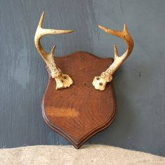 Mounted Deer Antler- I could do something like this with my husbands deer!