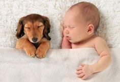 Training Tips for Bonding Pets with Babies & Toddlers