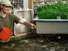 How to make a fish farm, and have another creative use for aquaponics.  http://www.ehow.com/how_4501761_create-backyard-fish-farm.html