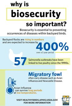 Make biosecurity your practice from day one! Agriculture Facts, Hatching Chickens, Backyard Poultry, Backyard Birds, Flocking, Infographic, Management, Twitter, Healthy