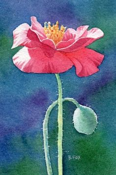 POPPY flower watercolor painting by Barbara Fox, painting by artist Barbara Fox