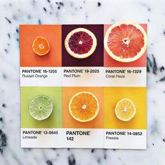 A designer Lucy Litman combina cores encontradas no mundo com amostras de Pantone. A artista explica que não é difícil encontrar as cores e que o que a surpreende é a variedade de cor dentro de cada tipo de alimento, ela conta que um limão, por exemplo, pode ter muitos tons diferentes, dependendo do tipo e do quão maduro está.