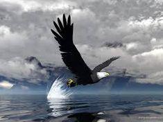 Resultado de imagem para wallpaper aguia marinha