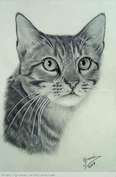 dibujos de un gato real - Google Search