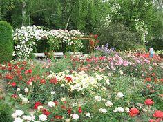 Rosenschnitt von März bis Oktober - Rosen verstehen