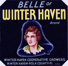 Belle of Winter Haven :: Florida Southern College Fruit and Vegetable Crate Label Collection Vintage Food Labels, Vintage Ads, Vintage Prints, Orange Crate Labels, Winter Haven Florida, Vegetable Crates, Florida Oranges, Vintage Florida, State Of Florida