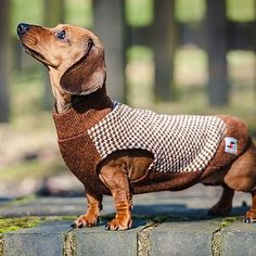 dachshund gloucester sleeveless tweed jumper by redhound for dogs | notonthehighstreet.com