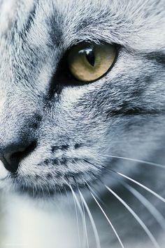 Beautiful #Cat~
