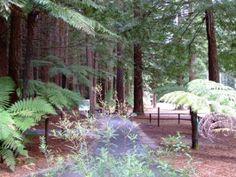 Rotorua Redwoods - The entrance to the six walking tracks.