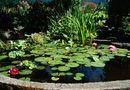 Advantages and disadvantages of a solar pond. Pond life relies on solar energy. Pond Plants, Aquatic Plants, Water Plants, Outdoor Ponds, Ponds Backyard, Backyard Ideas, Garden Ponds, Pond Ideas, Garden Hose