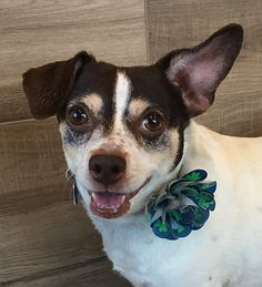 I'm an easy going gal with plenty of pep. My foster mom took such great care of me, but now I'm ready to find a home of my own (with plenty of chicken to share). Interested in learning more about me?