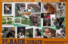 POSTING FOR Dog4U, Inc. PLEASE DOANTE FOR 20 ANIMALS TO GO NORTH https://fundrazr.com/campaigns/d10vO2/ab/5YSgeThe next trip north will move 20 animals from South Carolina, at $62.25 per animal, north to two of our rescue partners in Massachusetts. We will be renting a vehicle in order to get these guys north. Thanks to our volunteer driver's, we only have to fund raise for rental and fuel. The shelters will be slam packed due to the Fourth of July holiday so we need to make space at our…
