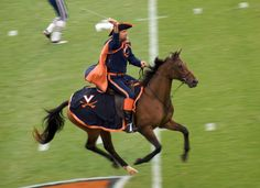 Come cheer on the Virginia Cavaliers and see our live mascot.... CAVMAN!