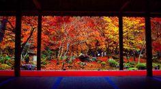 2016/11/19 京都 圓光寺  小さいけど綺麗で好き #圓光寺 #京都 #kyoto #京都旅行 #そうだ京都行こう  #紅葉 #ベストシーズン #額縁 #nikon #gopro #絶景  #旅 #旅行 #holiday_official_jp #retrip #jalan #jalan_asobi #holiday