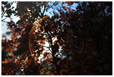 Photo by me. Photo: Diána Rigó - autumn leaves  Budapest, Sashegy, in the fall of 2013 #budapest #hungary #photography #sashegy #autumn #fall #colorful #leaves