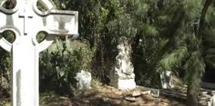 Trunks, Plants, Cities, Drift Wood, Flora, Plant