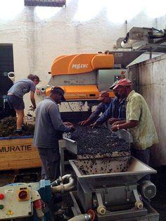The Pelenc Destemmer Afrikaans, Farm Life, Image, Afrikaans Language