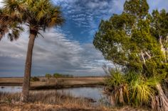 Savannah View at Crystal River Preserve State Park in Florida