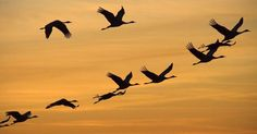 Geese begin to fly South...to places like TX right? ;) Hehe.