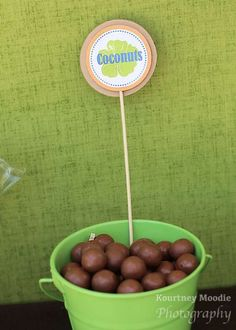 You can't have a Moana birthday party and not 'consider the coconut', so how about adding these chocolates that look a lots like coconuts? See more party ideas and share yours at CatchMyParty.com
