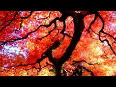 Relax Buddhist Meditation Music ~ Zen Garden ~ Feng Shui ~ 1