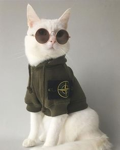 30 Purr-fect Dress Up That Your Cats Will Love – Feminine Buzz – Kate Chibrisova - Baby Animals Fluffy Kittens, Cats And Kittens, Beautiful Cats, Animals Beautiful, Cute Baby Animals, Funny Animals, Gatos Cool, Chesire Cat, Cat Sunglasses