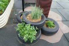 Really like these tyre planters.