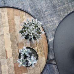 Styling idee met tafeltjes en cactussen