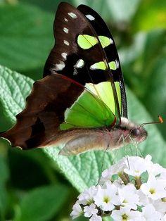 Butterfly, via Flickr.