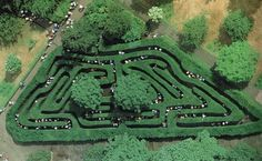 The English have always loved elaborate mazes and one of their most famous can be found within the grounds of the majestic Hampton Court Palace, not far from London. The maze was planted in the late 1600s for King William of Orange and covers an area of 60 acres. Only a small section is shown here. The palace itself dates back to the time of King Henry VIII in the early 1500s and remains in excellent condition.
