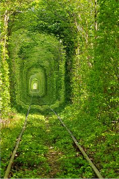 I'd love to make a living tunnel in my someday house.