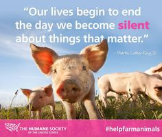 #LoveThisLife of fighting for animals and killing #aggag at @HumaneSociety