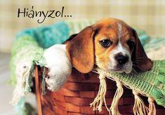 Hianyzol Kepek - Bing Képek I Miss You, Dog Food Recipes, Pets, Women's Fashion, Iphone, Animals And Pets, Fashion Women, Miss You