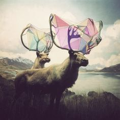 Elk photo illustrated with geometric color.