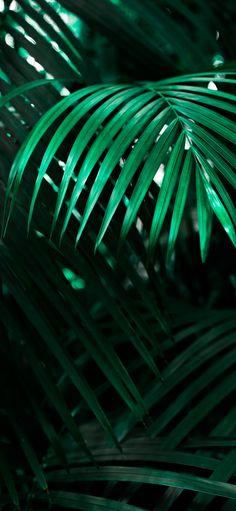 Citadelle Eau de Parfum was inspired by the lush green forests of Haiti. Iphone Wallpaper Tropical, Palm Leaf Wallpaper, Tree Wallpaper Iphone, Beach Wallpaper, New Wallpaper, Iphone Wallpapers, Green Wallpaper, Wallpaper Plants, Iphone Backgrounds
