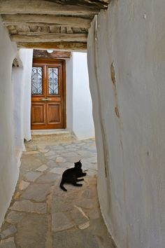 'Naxian Cat' by OldSchoolTraveller Photographs, Cats, Home Decor, Gatos, Decoration Home, Room Decor, Photos, Cat, Kitty
