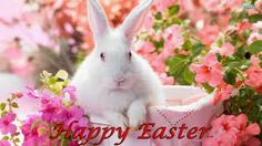 It's finally spring and we are so excited! We are ready for winter to be over and we want you to celebrate with us! So next week we are giving out spring flowers to all the patients we see in the office! WE LOVE SPRING! Happy Easter, Easter Bunny, Easter Cats, Ostern Wallpaper, Rabbit Wallpaper, Spring Coloring Pages, Spring Wallpaper, Wallpaper Wallpapers, Computer Wallpaper