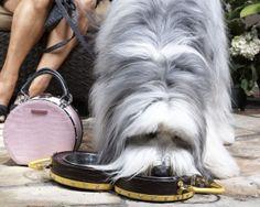Portable Dog Bowl!  $95.00